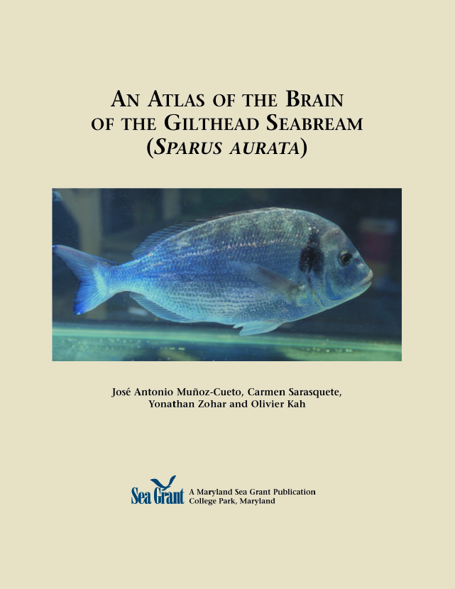 Cover image of An Atlas of the Brain of the Gilthead Seabream (Sparus aurata).