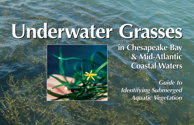 Cover of Underwater Grasses in Chesapeake Bay & Mid-Atlantic Coastal Waters: Guide to Identifying Submerged Aquatic Vegetation.